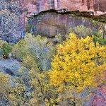 Fall Foliage at Weeping Rock