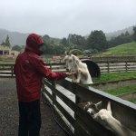 Sheep farm animals