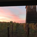 Looking north from our room across the vineyard at sunset.