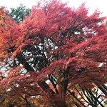 Bilde fra Sogi Park