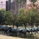 cattle drive through downtown