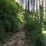 Billede af Multnomah Falls