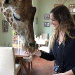 Giraffes at Breakfast!