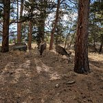 صورة فوتوغرافية لـ Colorado Cottages
