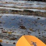 Otters, Kelp, Sea lions