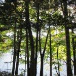 木の間越しのチミケップ湖