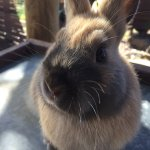 """One of our pet rabbits """"Mixa"""""""
