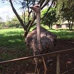 Photo de Nairobi Mamba Village