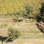 Огород монахинь