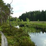 Teijo national park Εικόνα