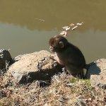 Photo of Monkey Park Iwatayama