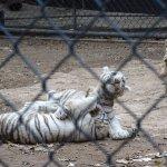 Photo of Zoological Park of Centenario ( Parque Zoologico del Centenario)