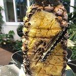 Butterfly eats Pineapple
