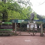 Photo of Sherwood Forest