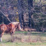 A horse out to pasture