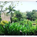 Photo of Pura Vida Resort