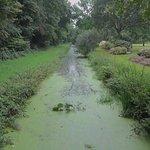 Rhododendronpark - Allmerspark