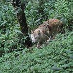 Photo of Himalayan Zoological Park