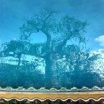 Photo of Planet Baobab