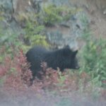 Bear Viewing & Ecology Tours