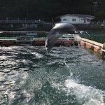 Photo of Shimoda Aquarium
