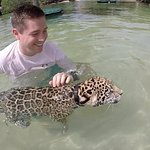 Swimming with baby Jaguar
