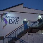 Photo de Aquarium of the Bay