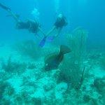 Foto de San Andres Divers