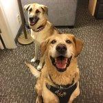 Doggies in Birmingham