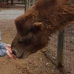 The camel was our favorite to feed.