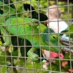 Foto de Kula Botanical Garden