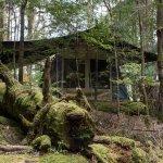 Tarkine Trails - Tarkine Rainforest Retreat Picture