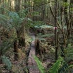 Tarkine Trails - Tarkine Rainforest Retreat ภาพถ่าย