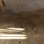 Holes and big stain in carpet