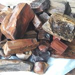 Petrified wood from Chinchilla