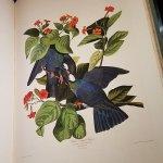 Bild från The Huntington Library, Art Collections and Botanical Gardens