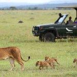 This Safari starts from hotel in the Zanzibar at earlier in the morning upto Zanzibar ferry to t
