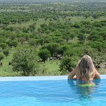 Watching the elephants go by from our lodge in Serengeti!