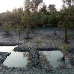 Tour de Sundarbans - Day Tours Photo