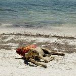 Voyager Beach Resort Photo