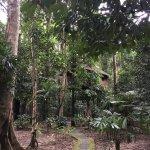 Photo de Khao Sok Nature Resort
