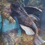 Photo of Newport Aquarium