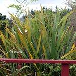 Photo de Village Maori
