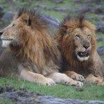 Royal Mara Safari Lodge Bild