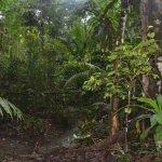 Billede af Maniti Expeditions Eco-Lodge & Tours Iquitos