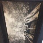 Ta Prohm photo on ceiling