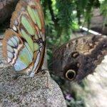 Butterflies at rest.