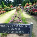 Photo of International Rose Test Garden
