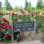 Photo of International Rose Test Garden
