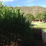 Each lodge is planted with plants but also vegetables used in the kitchen, we had corn....